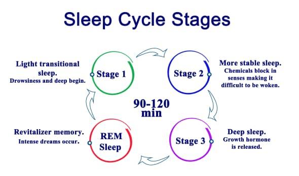 sleep cycle stages: does mk-677 improve sleep quality